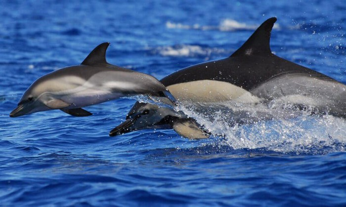 Meet dolphins at their natural habitat Spanish Home - Spain propety experts