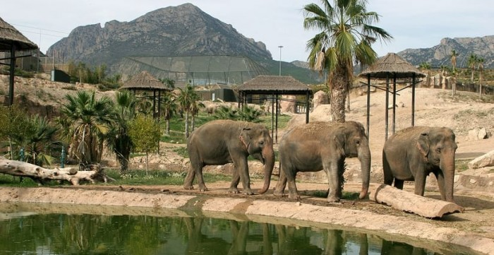 Connect with animals at Terra Natura Zoo Spanish Home - Spain propety experts