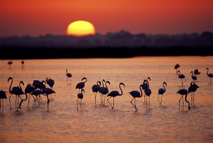 Donana Nature Park Spanish Home - Spain propety experts